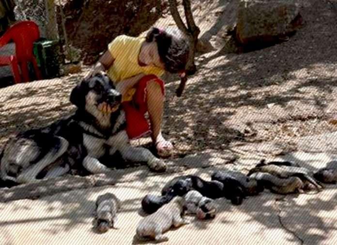 Karakız'ın tek batında 13 yavrusu oldu!